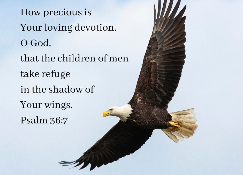 "A soaring eagle, with the words of Psalm 36:7 - ""How precious is Your loving devotion, O God, that the children of men take refuge in the shadow of Your wings."""