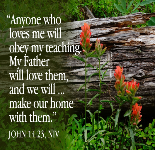 """Reddish-orange flowers grow beside a fallen log. Text read: """"Anyone who loves me will obey my teaching. My Father will love them, and we will come to them and make our home with them.""""—John 14:23"""