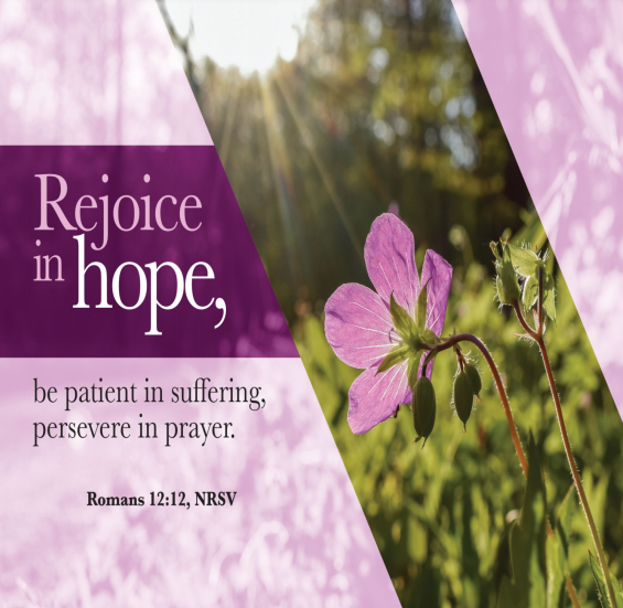 "A beautiful purple flower in a green field with bright sunlight shining down. Text is Romans 12:12—""Rejoice in hope, be patient in suffering, persevere in prayer."""